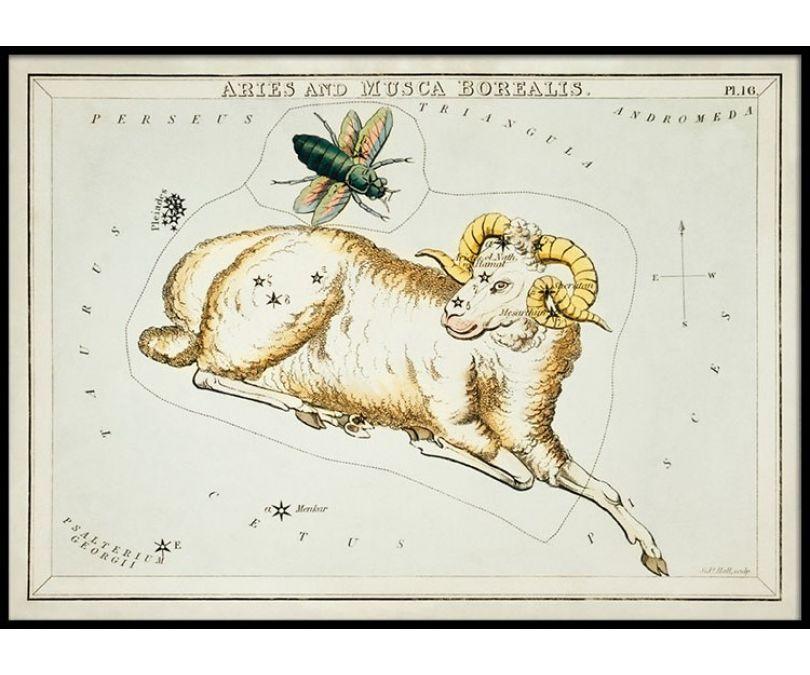 Plakat znaki zodiaku retro - Baran